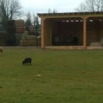 visite de la mini ferme